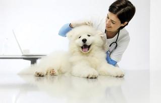 porady dla psów