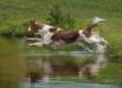 Żywienie psów sportowych, aktywnych i pracujących. Nowa karma Pronature Life Moov Active+