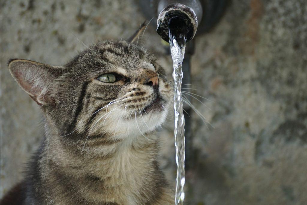 woda dla w diecie kota