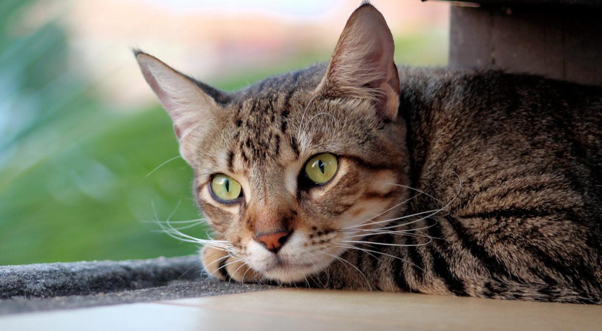 Przysmaki dla kotów Churu